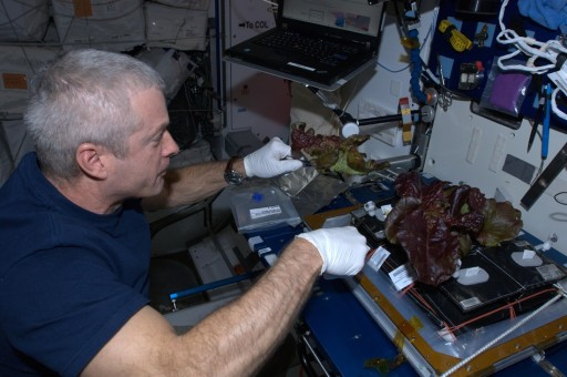 Veggie Harvesting - Photo: NASA