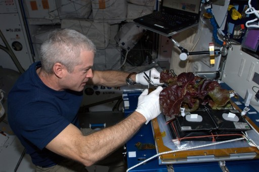 First Veggie Plant Harvest - Photo: NASA