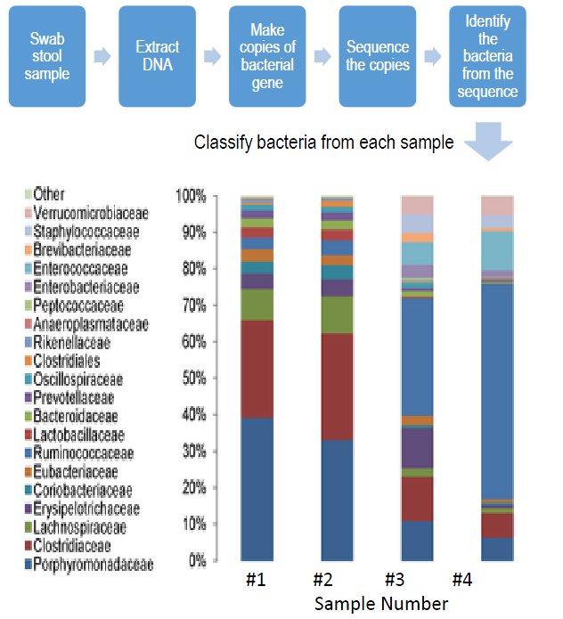 Metagenomic Sequencing of the Microbiome - Image: Northwestern University